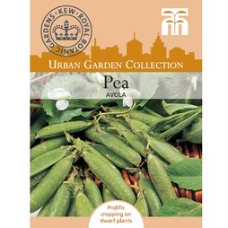 Pea 'Avola' (First Early) - Kew Collection Seeds