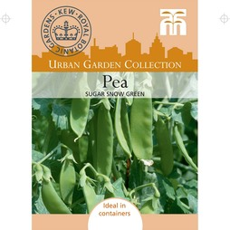 Pea 'Sugar Snow Green' (Mangetout)