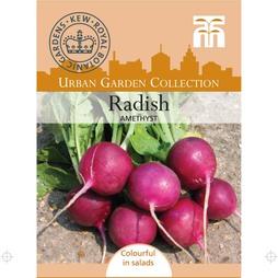 Radish 'Amethyst'