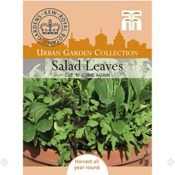 Salad Leaves 'Cut 'n' Come Again'