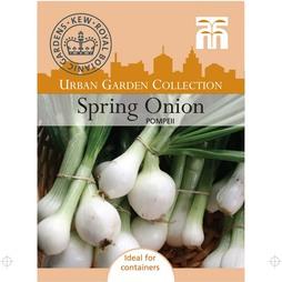 Spring Onion 'Pompeii'