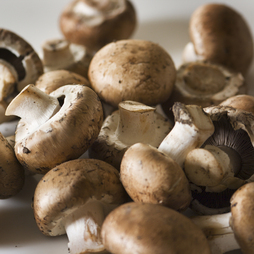 Mushroom 'Brown Cap Button' (Portabella)