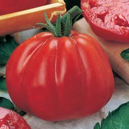 Tomato 'Cuore di Bue' - Vita Sementi® Italian Seeds