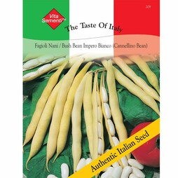 Dwarf Bean 'Impero Bianco' (Cannellini Bean) - Vita Sementi® Italian Seeds