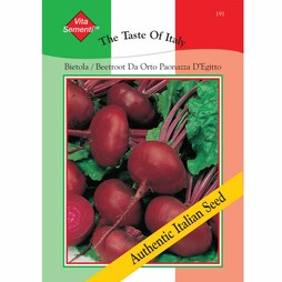 Beetroot 'Paonazza d'Egitto' - Vita Sementi® Italian Seeds