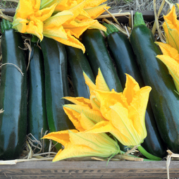 Courgette 'British Summertime' F1 Hybrid