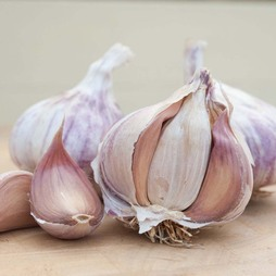 Garlic 'Germidour' (Spring/Autumn Planting)