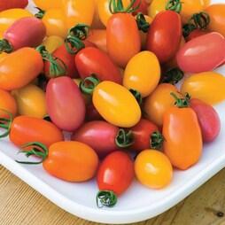 Tomato 'Rainbow Blend' F1 Hybrid