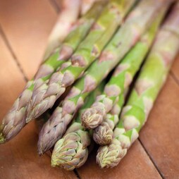 Asparagus officinalis 'Guelph Millennium' (Spring/Autumn Planting)