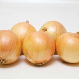 Onion 'Vulcan' (Spring Planting)