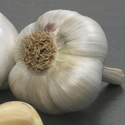 Garlic 'Tuscany Wight' (Spring Planting)