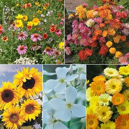 Pretty Pollinator Mix