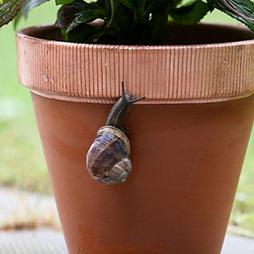 No More Slugs & Snails Copper Tape