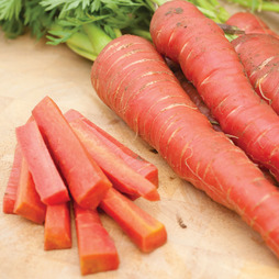 Carrot 'Atomic Red'