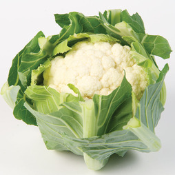 Cauliflower 'White Step' F1 Hybrid (Autumn)