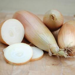 Onion 'Kappa'
