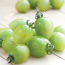 Tomato 'Green Envy' F1 Hybrid