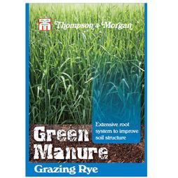 Green Manure 'Grazing Rye'