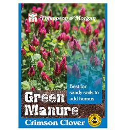 Green Manure 'Crimson Clover'