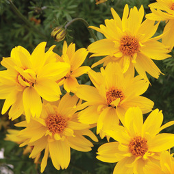 Bidens 'Gold Nuggets™'