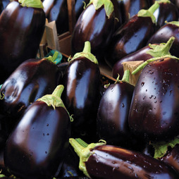 Aubergine 'Bonica' F1 Hybrid - RHS endorsed vegetable seeds