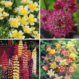 Nurserymans Choice Flower Seeds