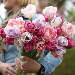 Tulip 'Florist's Treat Mixed'