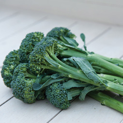 Broccoli 'Sibsey' (Bellaverde®) F1 Hybrid (Calabrese)