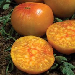 Tomato 'Ananas'