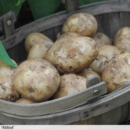 Potato 'Super Season of Spuds Collection'