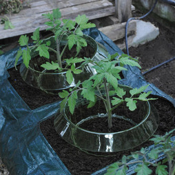 Tomato Growing Bag
