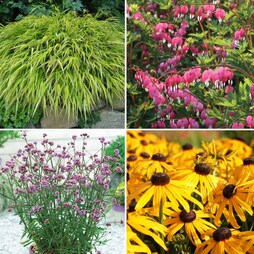 Nurserymans Choice Large Plants (1 litre)