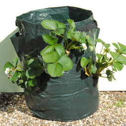 Strawberry Patio Planter