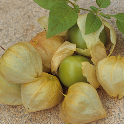 Tomatillo 'Green'