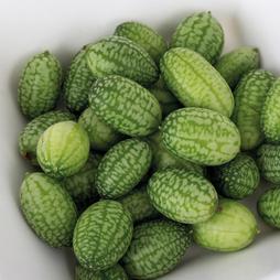Cucamelon 'Melothria'