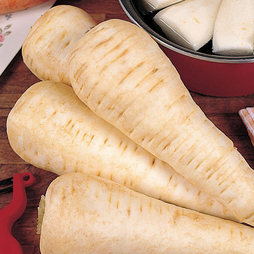 Parsnip 'White Gem'