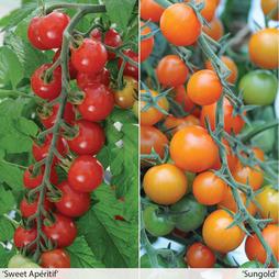 Sweetest 'Tomato Duo'