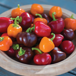 Sweet Pepper 'Mini Bell Improved Mix'