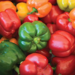 Sweet Pepper 'Summer Salad Improved Mix'