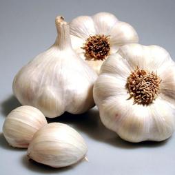 Garlic 'Garcua' (Spring/Autumn Planting)