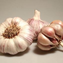 Garlic 'Garpek' (Spring/Autumn Planting)