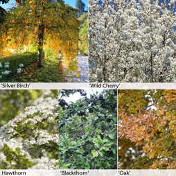 Native Hedging Collection