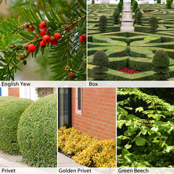 Formal/Topiary Hedging Collection