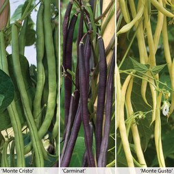 All Season Beans Collection