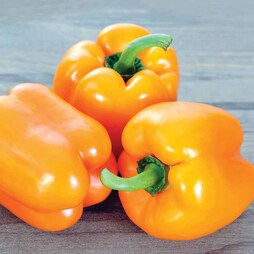 Sweet Pepper 'Gourmet'