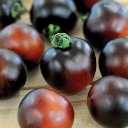 Tomato 'Indigo Cherry Drops'