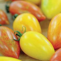Tomato 'Artisan Mix'