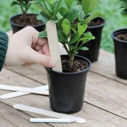 Wooden Plant Labels
