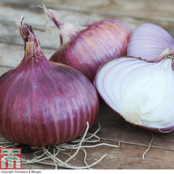 Onion 'Red Baron' (Spring Planting)