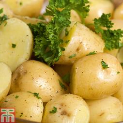 Potato 'Arran Pilot'